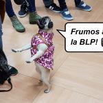 blp12-min