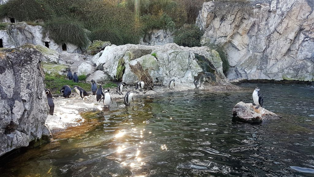 schonbrunn-zoo-penguins