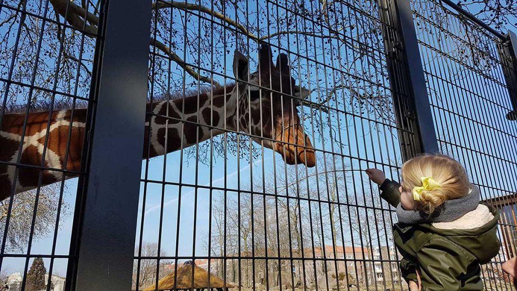 amsterdam zoo artis